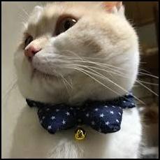 fxダイスケ猫